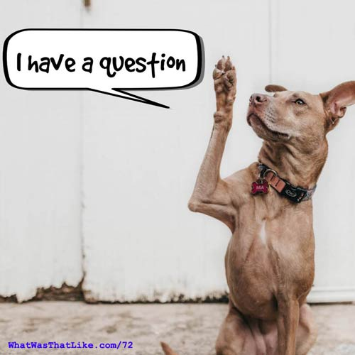 Dog with a question